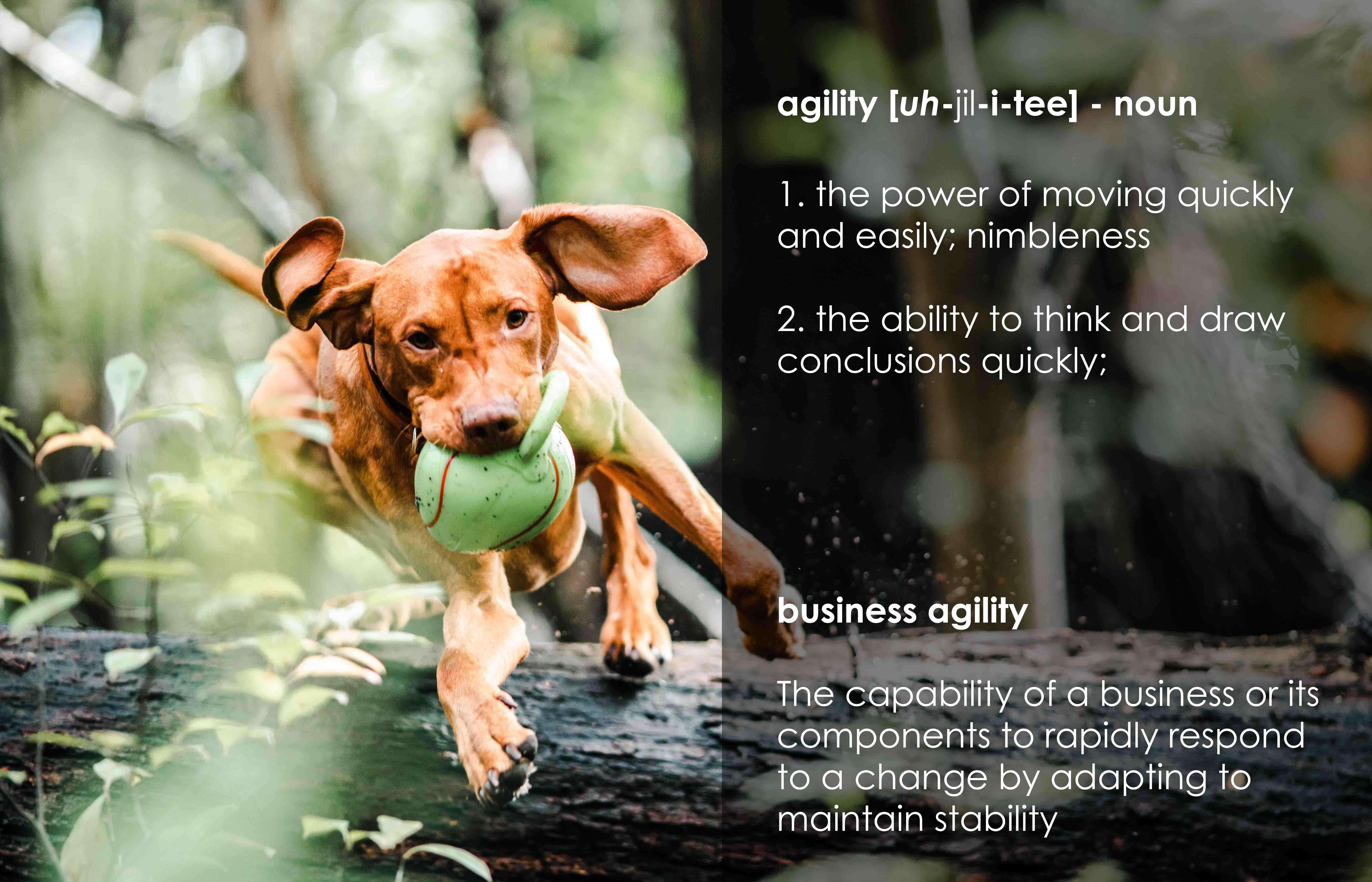 Agility_Definition